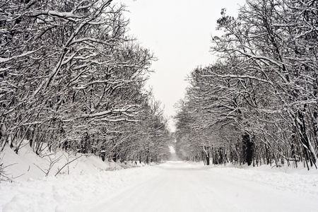 Snowy winter road in the woods. Stock Photo - 6355094
