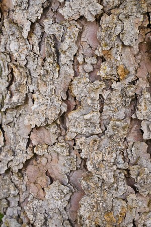 else: Pine tree bark and nothing else.