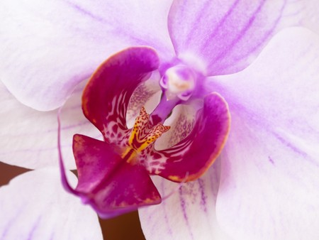 Close-up of a white orchid with pink spots Stock Photo - 7392370
