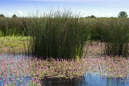 Beautiful natural aquatic ecosystems, in the summer. photo