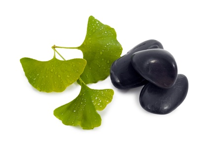 Ginkgo Biloba leaf, and black rocks. photo