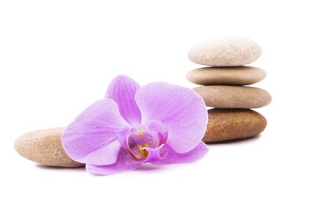 Brown stones and purple orchids. photo