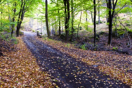 Beautiful autumn forest road winds in the mountains. Stock Photo - 11057608