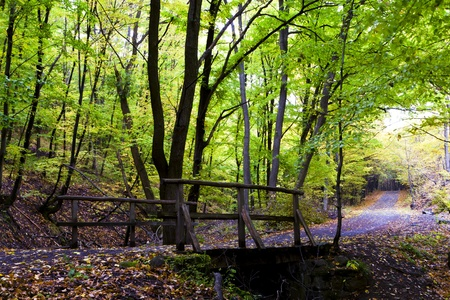 Beautiful autumn forest timber bridges. photo