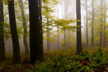 Misty autumn forest, the mountains. Stock Photo - 11057487