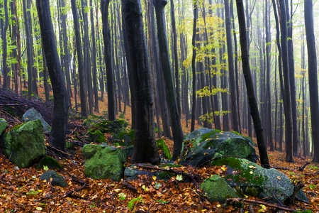 Misty autumn forest, the mountains. photo