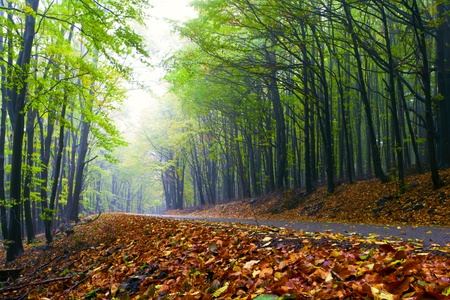 Beautiful autumn forest road winds in the mountains. Stock Photo