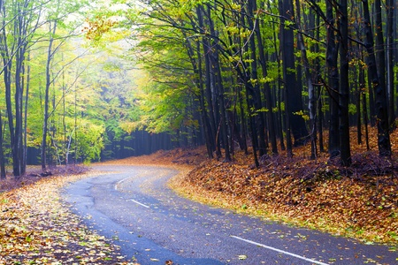 Beautiful autumn forest road winds in the mountains. photo