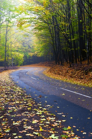 Beautiful autumn forest road winds in the mountains. Stock Photo - 11057604
