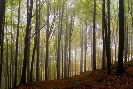 Misty beautiful autumn forest; the mountains. Stock Photo - 11057500
