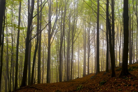 Misty beautiful autumn forest; the mountains. Stock Photo - 11057500