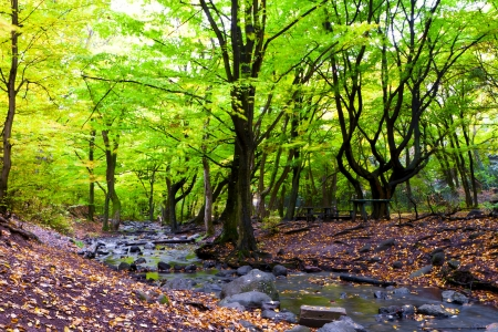 Mountain stream in the rocks of the beautiful autumn forest.