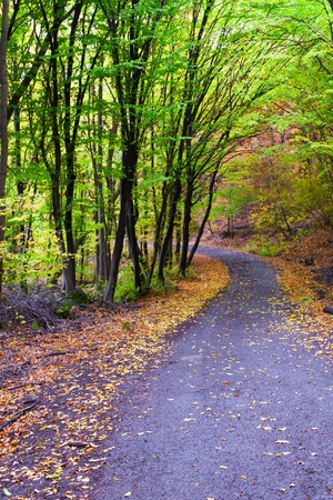 Beautiful autumn forest surrounding roads. photo