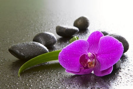 Orchids, black stones on a black background.
