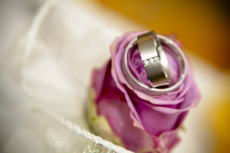 The pink roses, two wedding ring  photo