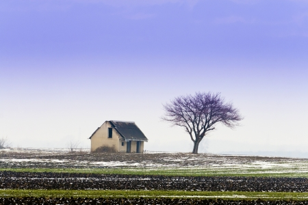 Abandoned house, winter bald tree  photo