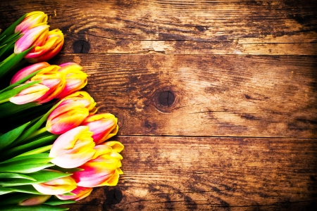 Beautiful colorful tulips on a rustic wooden background