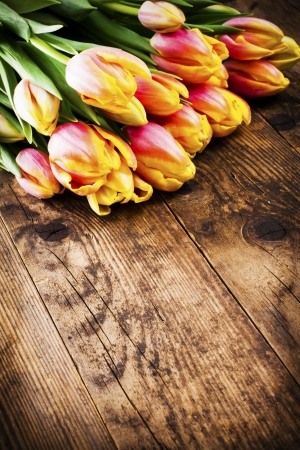 Beautiful colorful tulips on a rustic wooden background  photo