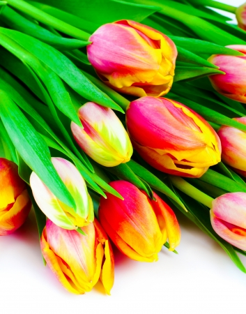 Colorful tulips in a bouquet to each other  photo