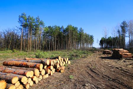 Forest landscapes, trees felled redwood