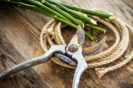 secateur: Pruning shears and rope on wood background tree branches. Stock Photo