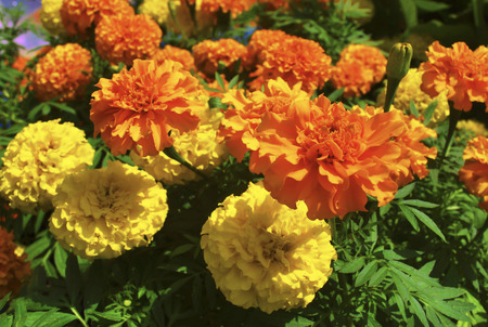 excursions: beautiful flower under the sun