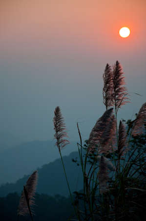 grass flower in the moring from the top of the mountain photo