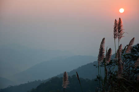 grass flower in the moring from the top of the mountain Stock Photo - 7957470