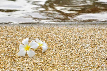 the plumeria on the sand near the beach Stock Photo