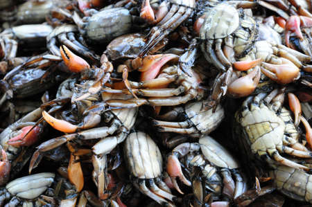 the huge amount of small salty crab in thai style cooking Stock Photo