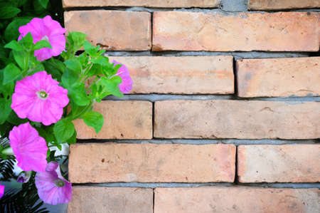 the old brick wall and the flowers photo