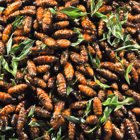 the exotic menu in thailand is fried insect