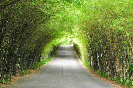 先の長い竹の道の通路