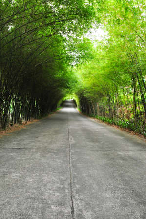 brick road: The walkway of bamboo road to long destination