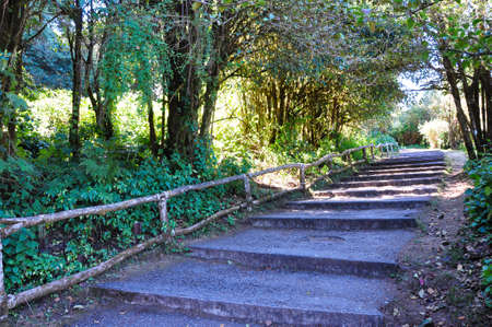 the garden path along the forest Stock Photo - 9811869