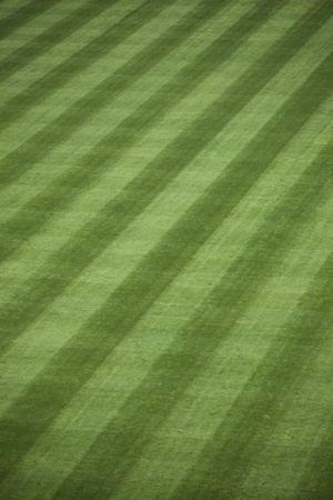 sod: Background of manicured outfield grass at a baseball stadium.  Stock Photo