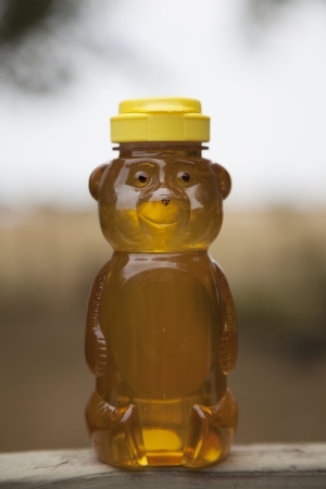 honey comb: A single honey bear sits outside holding organic, home-grown honey