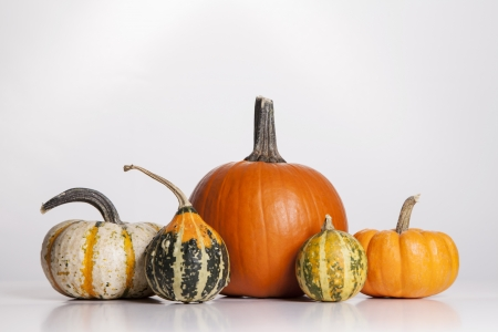 A group of pumpkins and gourds sit on a white background  photo