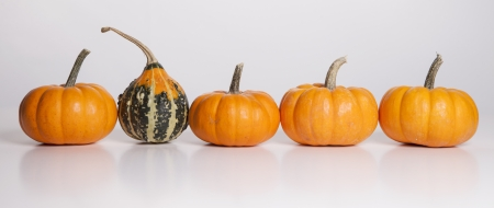 Four small pumpkins and one gourd sit in a row on a white background  photo