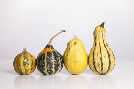 smallest: Four gourds stand in a row  on a white background from smallest to largest