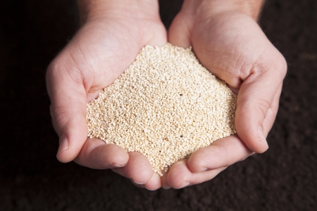 A pair of cupped hands are holding dried quinoa over a bed of dirt  Stock fotó