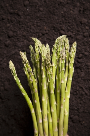 asparagus bed: A cluster of organic asparagus sits on a bed of dirt