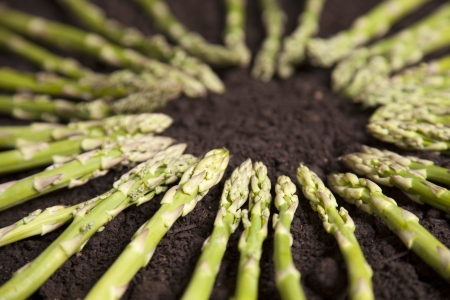 asparagus bed: Asparagus formed in a circle sits on a bed of dirt  Stock Photo