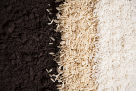 eachother: White and brown rice lay next to eachother on a bed of dirt