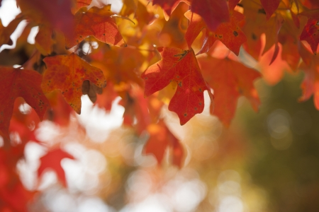 Red and orange fall leaves surround the photo frame with bokeh in the background