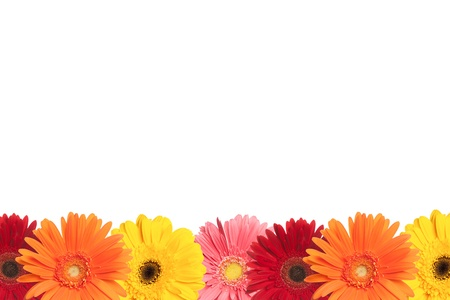 orange gerbera: A row of colorful daisies are shown at the bottom of a white page