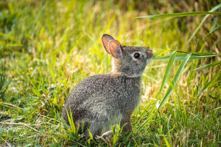 close up of a rabbit eating grass along a trail