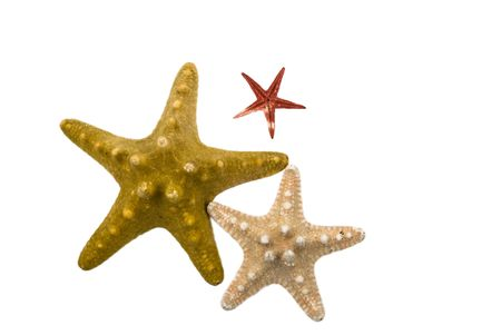 Three different starfish isolated on white background and copy space for text Stock Photo - 4307321