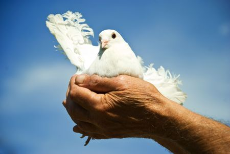 Elderly man hands holding a white dove against blue sky and sun concept of hope Stock Photo