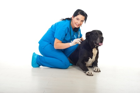 Smiling veterinary woman holding a syringe with treatment and prepare to vaccine a great dane dog photo